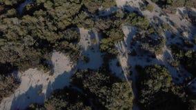 Άνθρωποι που περπατούν στο χειμερινό δάσος κοντά στους μικρούς θάμνους και πράσινα κωνοφόρα δέντρα στην ηλιόλουστη χειμερινή ημέρ φιλμ μικρού μήκους
