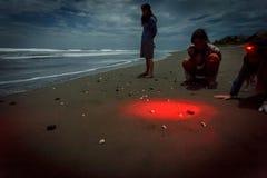 Άνθρωποι που προσέχουν τα hatchlings που τονίζονται από το φακό που σπεύδει στο νερό κατά τη διάρκεια της έκδοσης χελωνών θάλασσας Στοκ Εικόνες