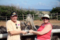 Άνθρωποι που ταΐζουν τη στρουθοκάμηλο στο αγρόκτημα στρουθοκαμήλων του Aruba Στοκ Εικόνες