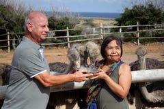 Άνθρωποι που ταΐζουν τη στρουθοκάμηλο Στοκ φωτογραφία με δικαίωμα ελεύθερης χρήσης