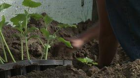 Άνθρωποι που φυτεύουν τα σπορόφυτα φιλμ μικρού μήκους