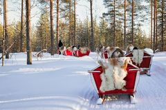 Άνθρωποι στο σαφάρι τροχόσπιτων ελκήθρων ταράνδων στο δασικό φινλανδικό Lapland Στοκ Εικόνα