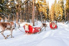 Άνθρωποι στο σαφάρι τροχόσπιτων ταράνδων στο χειμερινό δάσος στο Ροβανιέμι Στοκ φωτογραφία με δικαίωμα ελεύθερης χρήσης
