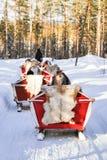 Άνθρωποι στο τροχόσπιτο ελκήθρων ταράνδων στο χειμερινό δάσος στο Ροβανιέμι Στοκ εικόνες με δικαίωμα ελεύθερης χρήσης