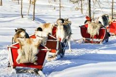Άνθρωποι στο τροχόσπιτο ελκήθρων ταράνδων στο χειμερινό δάσος στο Ροβανιέμι Στοκ Εικόνα