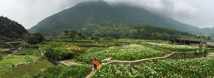 Άνθρωποι στο calla τομέα κρίνων στο πάρκο Yang Ming Shan, Ταϊβάν Στοκ εικόνες με δικαίωμα ελεύθερης χρήσης