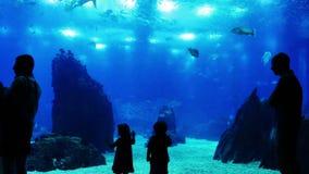 Άνθρωποι στο oceanarium απόθεμα βίντεο