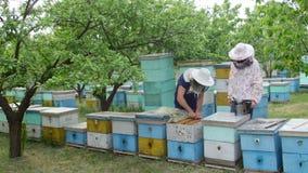 άνθρωποι 4K beemaker που καπνίζουν τις μέλισσες που εργάζονται με τη συσκευή καπνιστών απόθεμα βίντεο