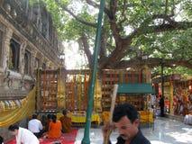 Άνθρωποι Meditating κάτω από το δέντρο Bodhi - μεγάλος ναός BodhGaya Ινδία του Βούδα Mahabodhi Mahavihara Στοκ εικόνες με δικαίωμα ελεύθερης χρήσης