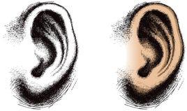 άνθρωπος αυτιών που διευκρινίζεται Στοκ εικόνες με δικαίωμα ελεύθερης χρήσης