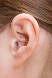 άνθρωπος αυτιών στοκ εικόνα