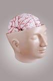 άνθρωπος εγκεφάλου Στοκ εικόνες με δικαίωμα ελεύθερης χρήσης