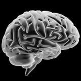 άνθρωπος εγκεφάλου Στοκ Εικόνες