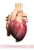 άνθρωπος καρδιών Στοκ φωτογραφίες με δικαίωμα ελεύθερης χρήσης