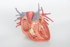 άνθρωπος καρδιών Στοκ φωτογραφία με δικαίωμα ελεύθερης χρήσης