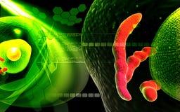 άνθρωπος κυττάρων Στοκ φωτογραφία με δικαίωμα ελεύθερης χρήσης