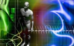 άνθρωπος σωμάτων διανυσματική απεικόνιση