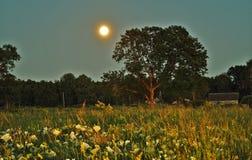 Άνοδος και φως φεγγαριών πέρα από το πράσινο δάσος στοκ εικόνες