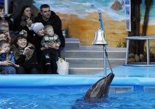 άνοιγμα dolphinarium Στοκ Φωτογραφία