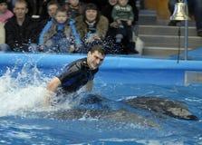 άνοιγμα dolphinarium Στοκ φωτογραφία με δικαίωμα ελεύθερης χρήσης