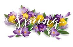 Άνοιξη λέξης με τους κρόκους λουλουδιών Έννοια υποβάθρου άνοιξη διάνυσμα διανυσματική απεικόνιση