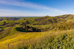 Άνοιξη ακτών Καλιφόρνιας φυσική Στοκ Φωτογραφία