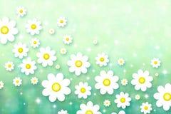 άνοιξη ανασκόπησης chamomiles Στοκ φωτογραφίες με δικαίωμα ελεύθερης χρήσης