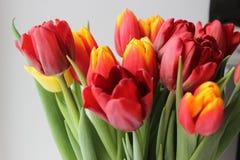 Άνοιξη, ανθοδέσμη των τουλιπών floral απεικόνιση σχεδίου καρτών ανασκόπησης φόντου Στοκ Φωτογραφία