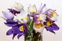 Άνοιξη ανθοδεσμών λουλουδιών Snowdrops Στοκ Φωτογραφίες