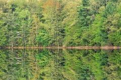 Άνοιξη, αντανακλάσεις λιμνών αιθουσών Στοκ Φωτογραφία