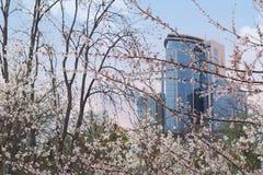 άνοιξη γραφείων οικοδόμησης kyiv ukraie Στοκ φωτογραφία με δικαίωμα ελεύθερης χρήσης