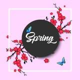 Άνοιξη Διανυσματική εγγραφή με τα λουλούδια και τις πεταλούδες ανθών κερασιών Απομονωμένος στο ρόδινο υπόβαθρο Στοκ Εικόνες