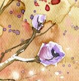 άνοιξη λιβαδιών λουλου&d Στοκ Φωτογραφίες