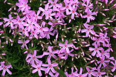άνοιξη κήπων λουλουδιών Στοκ εικόνες με δικαίωμα ελεύθερης χρήσης