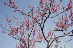 άνοιξη κήπων λουλουδιών Στοκ Φωτογραφίες