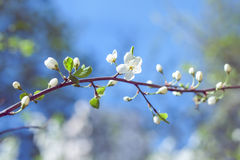 άνοιξη κήπων λουλουδιών Στοκ φωτογραφία με δικαίωμα ελεύθερης χρήσης