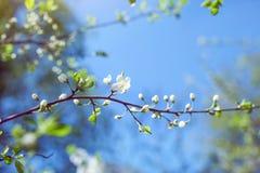 άνοιξη κήπων λουλουδιών Στοκ Εικόνες