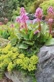 άνοιξη κήπων Στοκ Φωτογραφίες