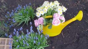 άνοιξη κηπουρικής εργασία κήπων απόθεμα βίντεο