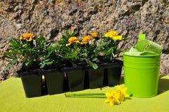 άνοιξη κηπουρικής λουλ&omi Στοκ εικόνες με δικαίωμα ελεύθερης χρήσης