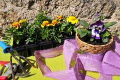 άνοιξη κηπουρικής λουλ&omi Στοκ Εικόνες