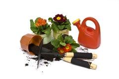άνοιξη κηπουρικής Στοκ Εικόνα