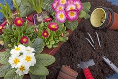 άνοιξη κηπουρικής Στοκ Φωτογραφία