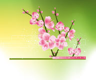 άνοιξη λουλουδιών ανασκόπησης Στοκ Εικόνα