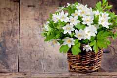 άνοιξη λουλουδιών ανθοδεσμών Στοκ Φωτογραφία
