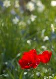 άνοιξη λουλουδιών ονείρ& Στοκ φωτογραφίες με δικαίωμα ελεύθερης χρήσης