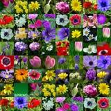 άνοιξη λουλουδιών συλλογής Στοκ Εικόνα