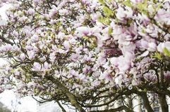 Άνοιξη λουλουδιών χαμόγελου λουλουδιών Στοκ εικόνες με δικαίωμα ελεύθερης χρήσης