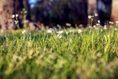άνοιξη λουλουδιών Στοκ εικόνα με δικαίωμα ελεύθερης χρήσης