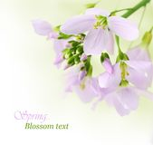 άνοιξη λουλουδιών Στοκ φωτογραφία με δικαίωμα ελεύθερης χρήσης